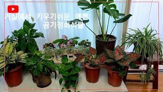 거실에서 키우기쉬운 예쁜 공기정화식물