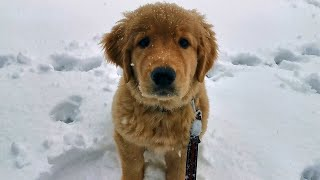 Puppy's First Time In The Snow (Dexter The Puppy)