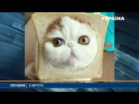 Вопрос: Кто в России предложил праздновать день кошек?