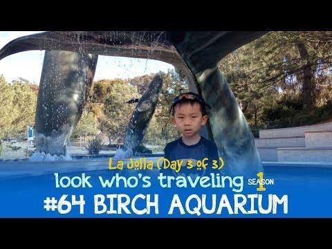 Birch Aquarium & San Diego Botanic Garden (Things to do in La Jolla with Kids): Look Who's Traveling