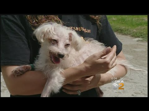 Neglected Dog Found 'Close To Death' In Leechburg