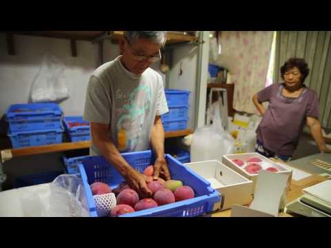 Mango Mike: Marine veteran plants roots in Okinawa