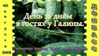 """День за днём в гостях у Галины"".  03.08.2019."