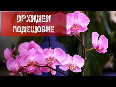 Экономим на орхидеях.