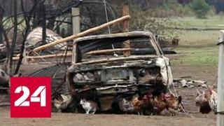 В Красноярском крае за сутки на треть сократилось число лесных пожаров