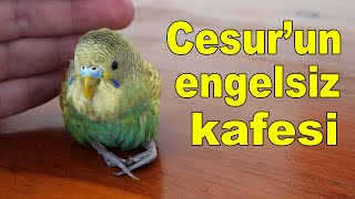 Caring For a Disabled Budgie