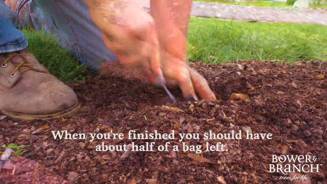 How To Fertilize Any Tree You