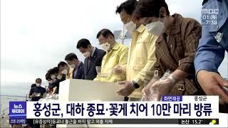 홍성군, 대하 종묘·꽃게 치어 10만 마리 방류/대전M…