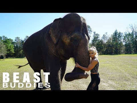 My Best Friend Is An Elephant | BEAST BUDDIES