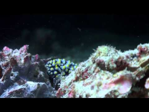 Living Together - A guide to symbiosis on coral reefs