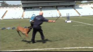 Dog Unit Set To Compete For Top Dog - Australasian Police Dog Trials