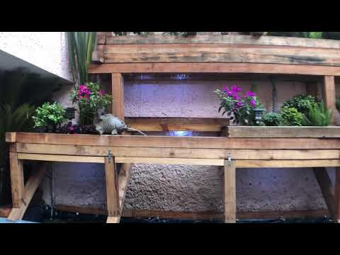 El Jardin Zenon Vertical Con Estanque De Wabisabi Restaurante Toluca