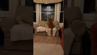 scared pets