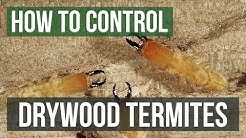 How to Control Drywood Termites