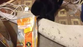 Кот надел мешок на голову