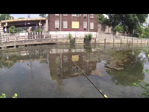 Fishing For Bass At The Manayunk Canal And The Schuylkill River (Manayunk/Philadelphia, PA)