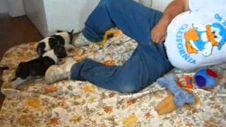 French Bulldog Puppies Mona Boys 4 11 2011 .wmv