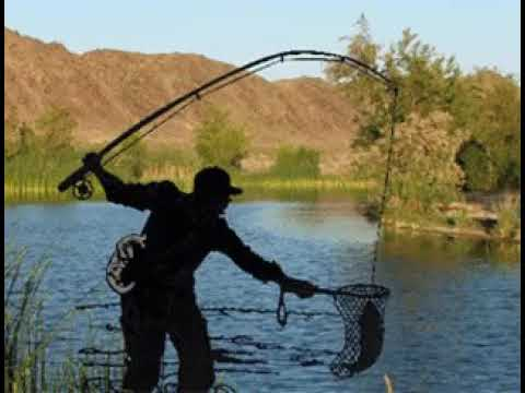 обладает анимация фото про рыбалку фитнес стал работой