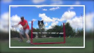 Partners Dog Training School Craziness