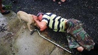 Люди думали, что на дороге лежит пьяница, и проходили мимо. Только пес пытался спасти хозяина!