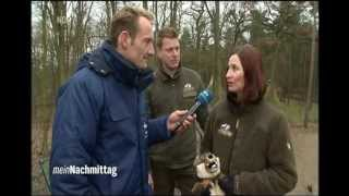 NDR 'Mein Nachmittag' 08.03.2013 - Wolfcenter & Tree Inn -