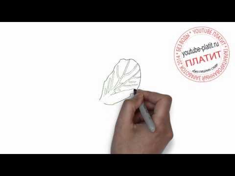 Как поэтапно нарисовать подорожник карандашом поэтапно 190