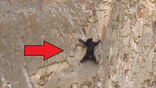 Una selección de momentos increíblemente interesantes y emocionantes de la vida de los animales