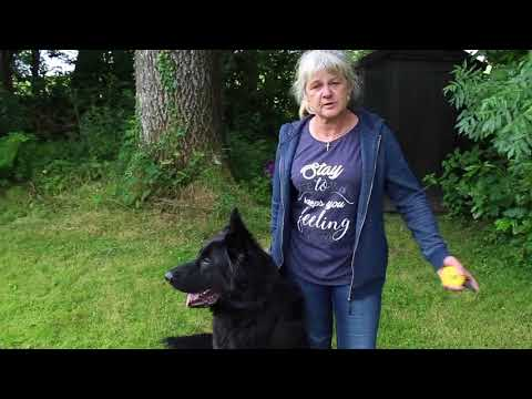 Dog Training Seminar   Horley, England 2018   Solid K9 Training Dog Training