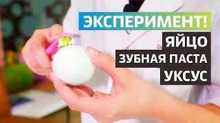 Что такое кариес, зубной камень и зубной налет   Эксперимент с яйцом   Доктор Д   Дентал ТВ