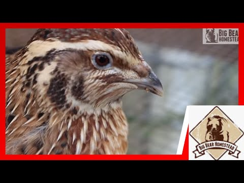Sustainable Living   QUAIL