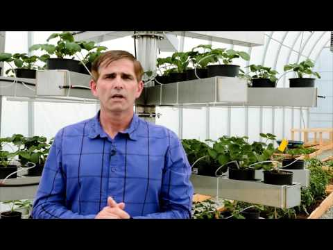 Affinor Growers Webcast from the Surrey BioPod - Inverstor Update