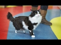 Amputee cat gets fitted with prosthetis paws; Armed nuts in body armor confront cops - 02/07/2017