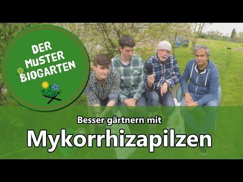 Wie Mykorrhiza Pilze im Garten Ihre Ernte verbessern können