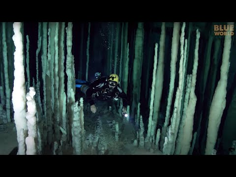 Cave Diving Training | JONATHAN BIRD'S BLUE WORLD