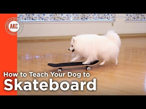 How to Teach Your Dog To Skateboard