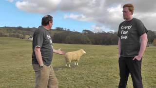 Energy Four Ewe -- The future of Wind Farms in sensitive locations