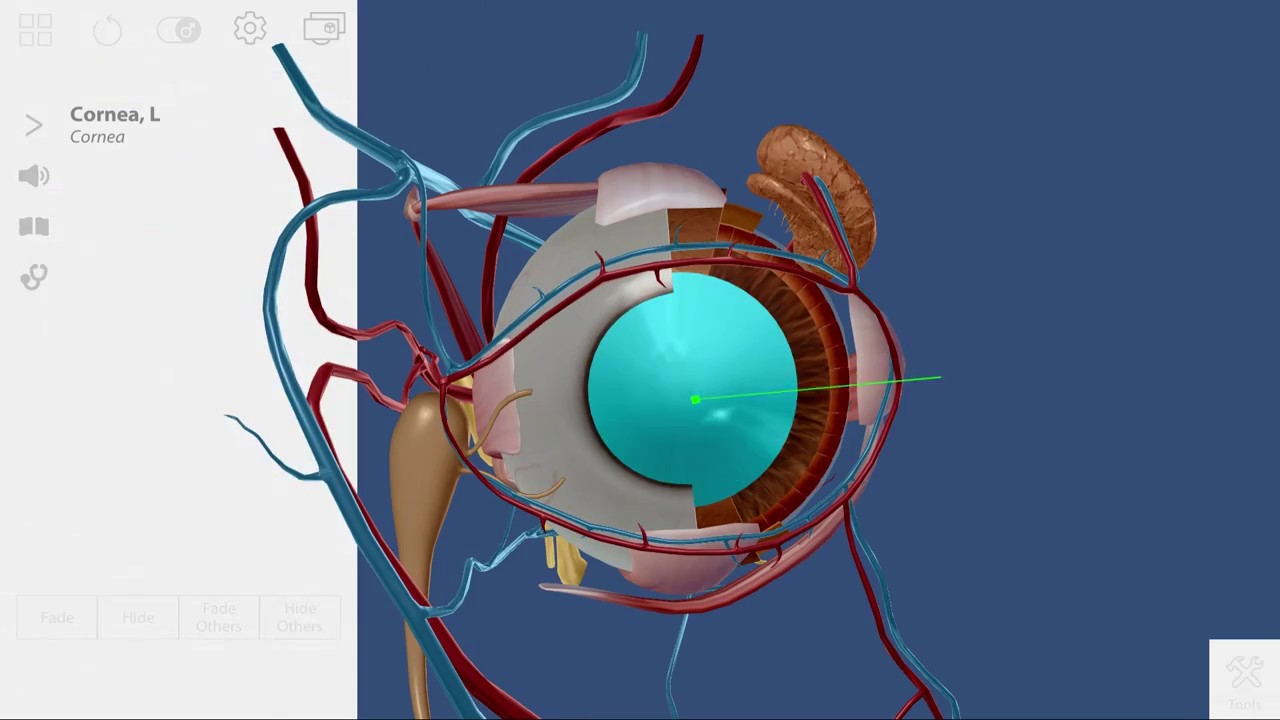 Eye Dissection: Virtual Reality Visible Body Activity with zSpace ...