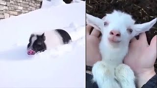 Funny Pet Fails Compilation 2020 Animals Cats Dogs | Funniest Videos Ever Try Not To Laugh | Funtoos