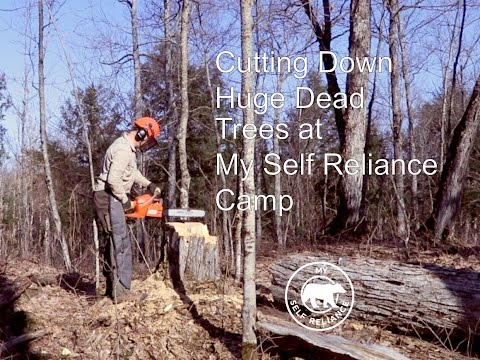Cutting Down Huge Dead Trees at My Self Reliance Camp