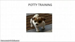 How To Potty Train Your Puppy | FREE MINI COURSE