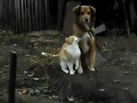 Дружба собаки и кошки - YouTube