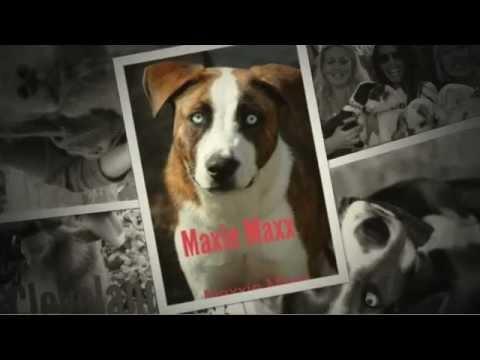 Gimme Shelter Animal Rescue - Sagaponack, New York