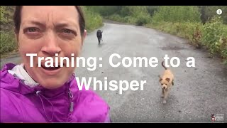 How To Train Your Dog To Come To A Whisper (pt 1 Of 3)