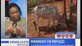 Wafugaji walalama kuhusu ugonjwa wa mifugo wa miguu na mdomo: Jukwaa la KTN thumbnail