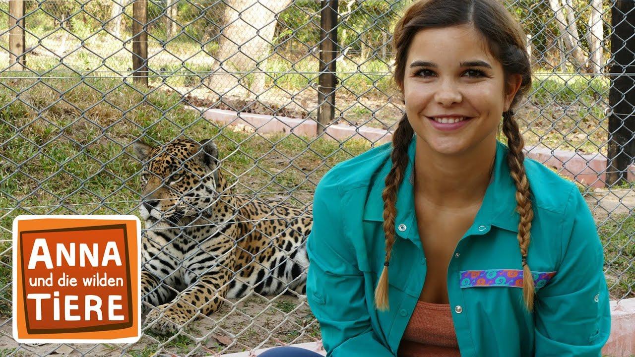 Die Raubkatzen Von Brasilien Doku Reportage Fur Kinder Anna Und Die Wilden Tiere Youtube