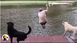 Dogs Jump Into Lake To 'Rescue' Dad | The Dodo