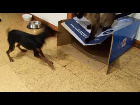 AtlasHD Conchita the Dog and her Cat Friends