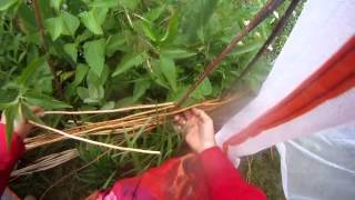 Nancy Today: Weaving A Grape Vine Trellis Asmr Weaving (basket Making Tutorial)