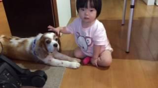 1歳児は撫でているつもりが、結構な平手打ちに。それでもじっと我慢し...