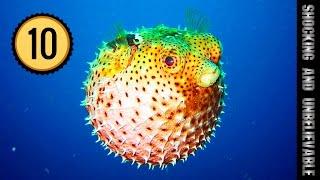 видео 10 самых ядовитых обитателей океана